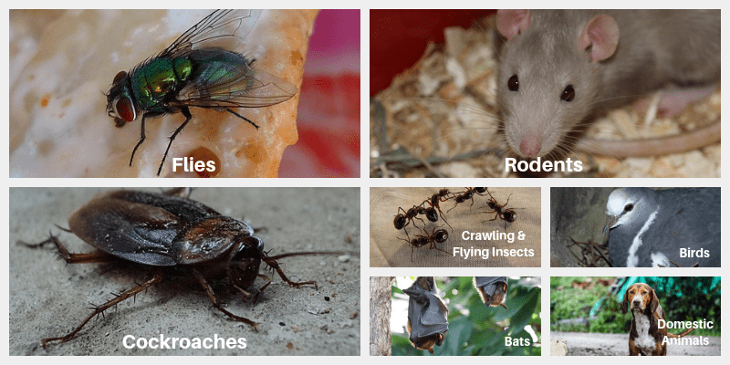 7 Pests you might find in the workplace