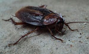 Cockroaches in the workplace