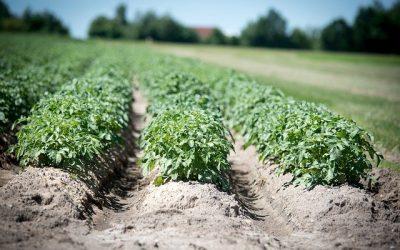 AGRICULTURAL: Farming